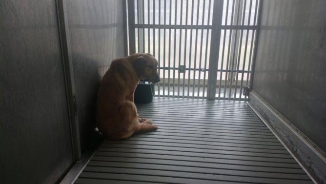 Conheça o extremo sofrimento de cachorros explorados em testes delaboratório