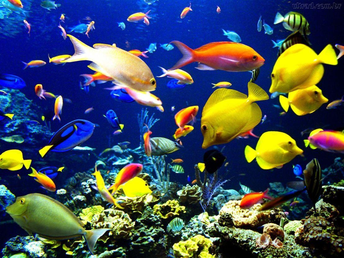 A vida social dos peixes pode ser fundamental para salvar os recifes decoral