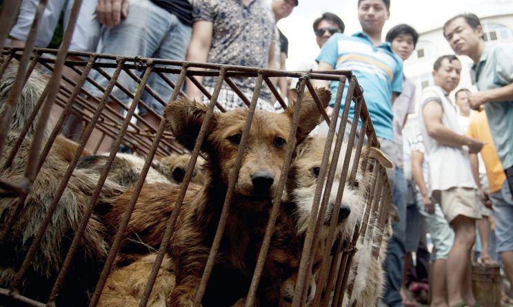 Ativistas afirmam que venda de carne de cachorro foi proibida em festivalchinês
