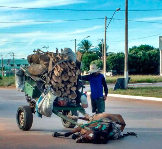 Cavalo tomba de exaustão após não suportar transportarcarga