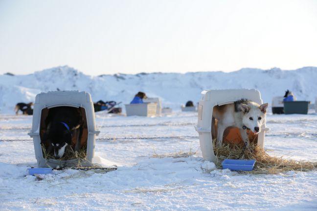 Coca-Cola patrocina corrida de trenó que já matou mais de 150 cães noAlasca