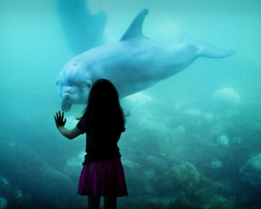 Vancouver proíbe cativeiro de golfinhos e baleias no seuaquário