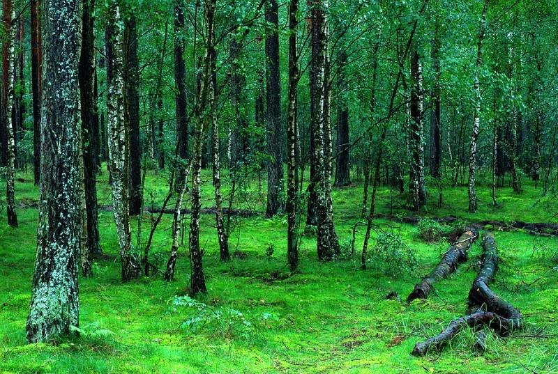"""UE dá """"último aviso"""" à Polónia para parar desflorestação numa das mais antigas florestaseuropeias"""