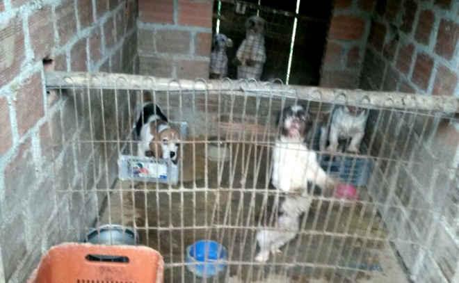 Polícia fecha canil clandestino e encontra cachorros em condições precárias, noPR