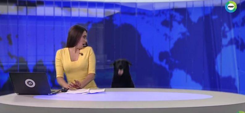 Cão de convidado escapa, invade telejornal ao vivo e deixa apresentadora estática:assista