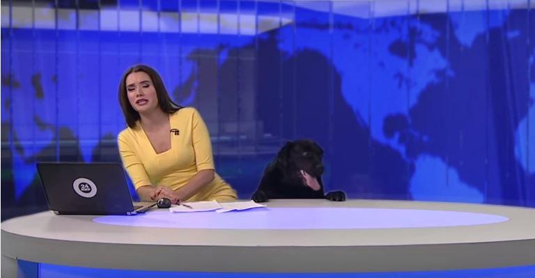 reporter-susto-cachorro-0517-1400x800-3 (1)