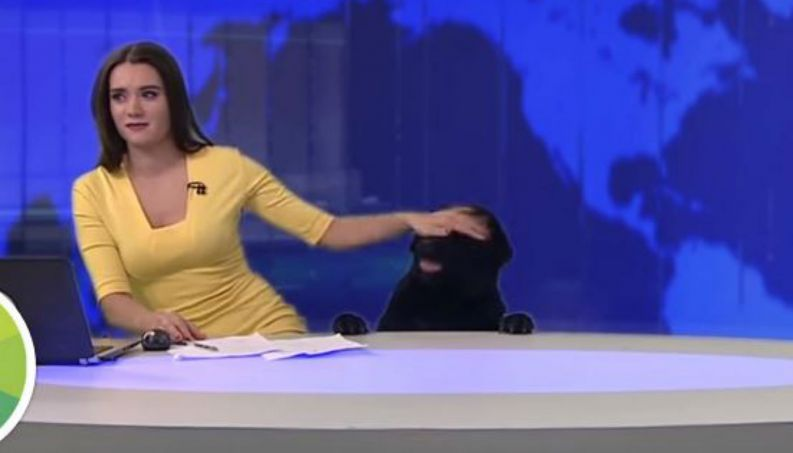 reporter-susto-cachorro-0517-1400x800-4