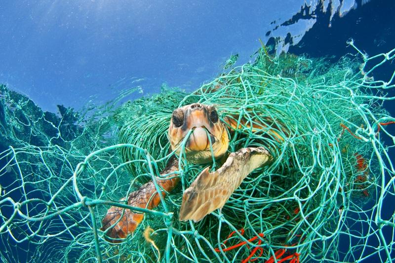 """Redes de pesca """"fantasma"""" continuam a matar animais muito depois de serem abandonadas nomar"""