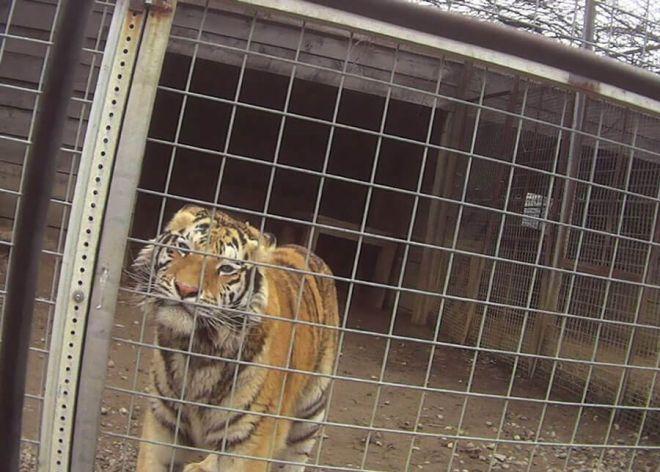 Isolamento, doenças e morte: Ativistas expõem os horrores suportados por animais emzoo