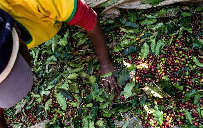 Nestlé admite que o seu café pode ter sido produzido com trabalho escravo noBrasil