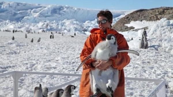 Migração não ajuda pinguins ameaçados por aquecimentoglobal