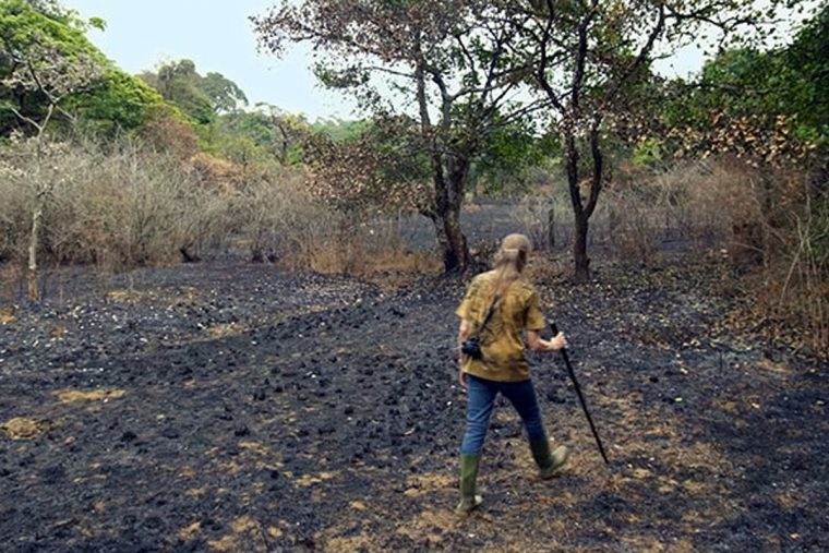 Casal passou 26 Anos replantando uma floresta tropical que compraram em 1991, veja como estáhoje