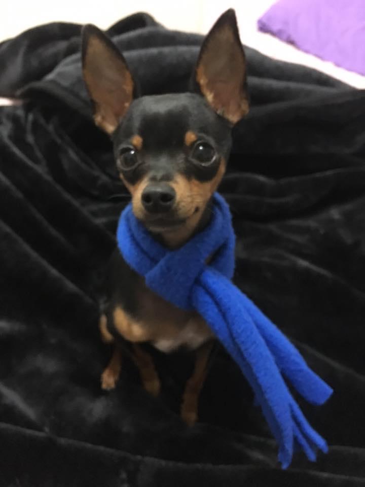 Cão que teve órgão genital mutilado se recupera, está lindão e muitofeliz
