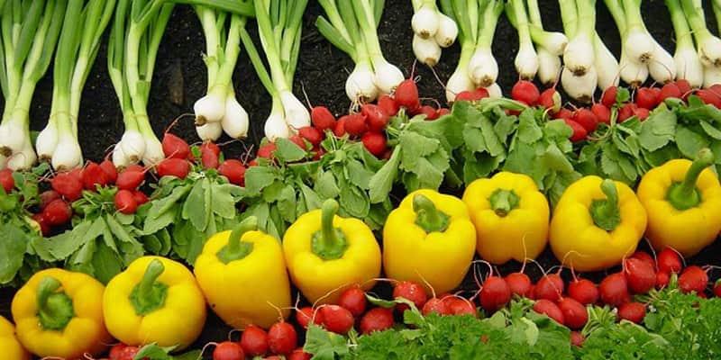 Dinamarca é o primeiro país que terá agricultura 100% orgânica porlei
