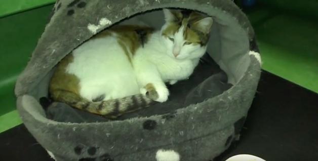 Animais de abrigo dormem pela primeira vez em uma cama e a gratidão deles écomovente