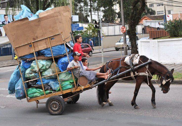 """Carroceiros recusam """"cavalos de lata"""" e pedem perpetuação da exploraçãoanimal"""