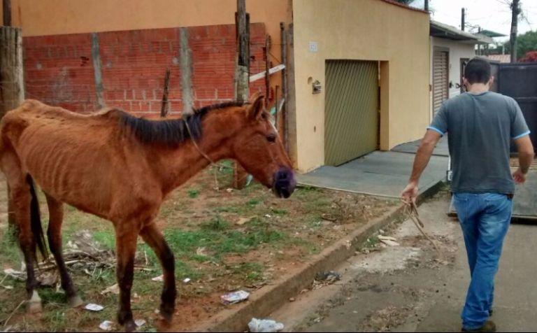 Cavalo é explorado, maltratado e abandonado emSP