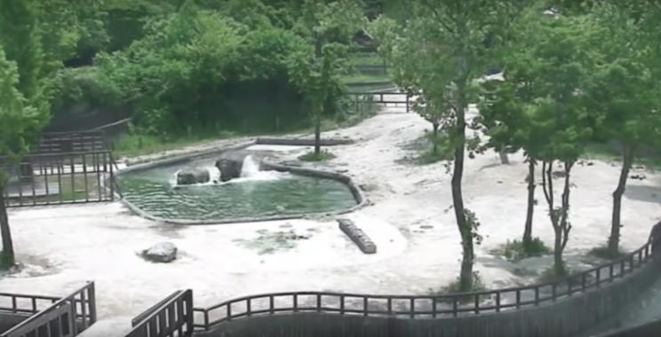 Elefantes salvam filhote de afogamento na Coreia do Sul; veja ovídeo