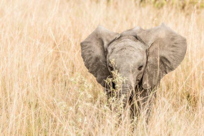 Namíbia permite captura e exploração de bebês elefantes em passeiosturísticos
