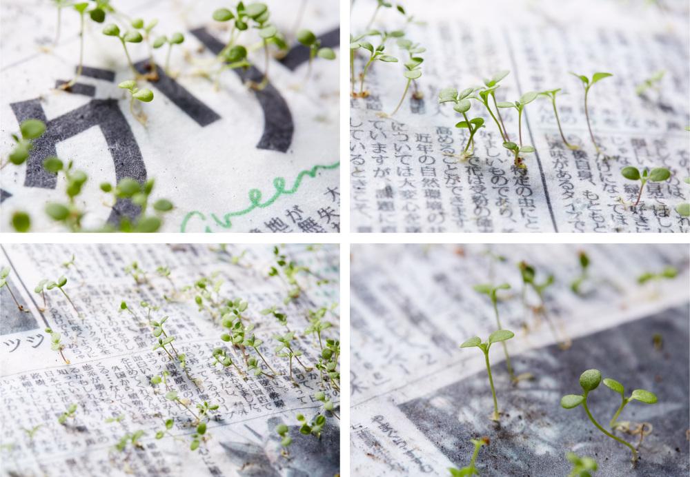 Green-newspaper-ciclovivo1