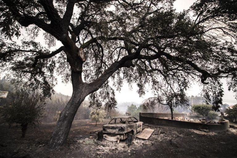 Centenas de animais morrem em incêndio emPortugal