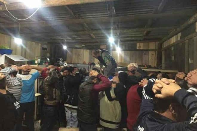 53 pessoas são flagradas em rinha de galo em Pinto Bandeira,RS