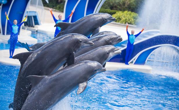 SeaWorld tenta mascarar exploração de animais apósdenúncias