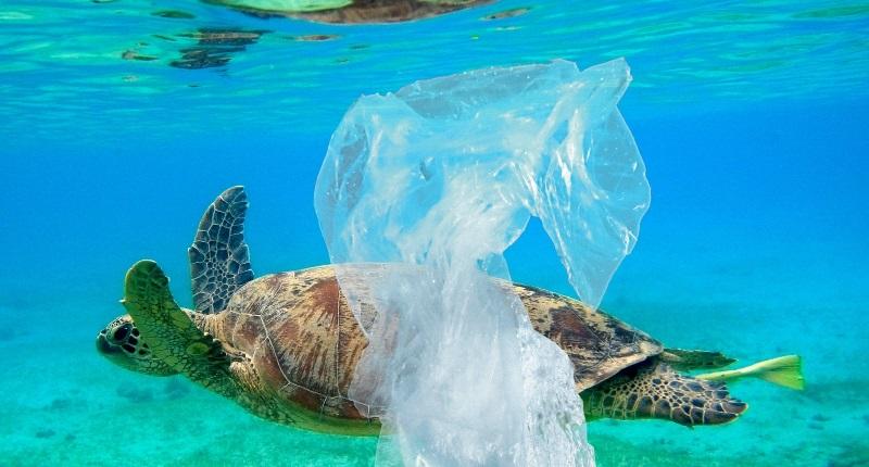 Fotos chocantes mostram o que o nosso lixo plástico faz aosanimais