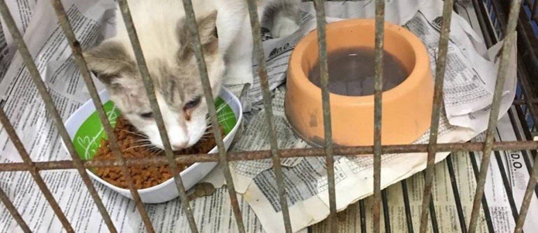Rio: ONGs denunciam maus-tratos de animais e falta de higiene na FazendaModelo