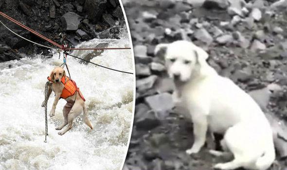 Cão se recusa a abandonar tutor e se torna símbolo da luta contra Festival deYulin