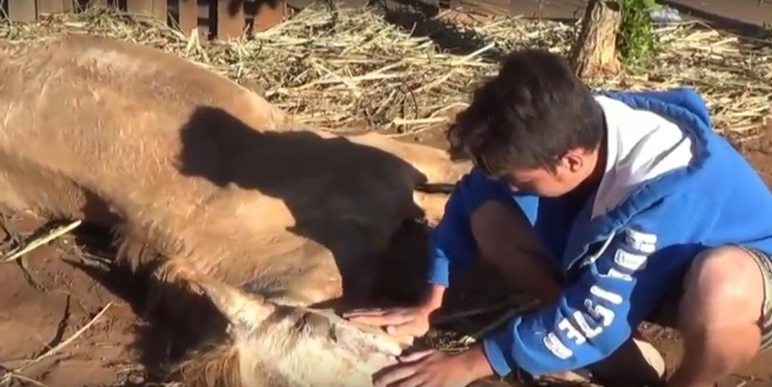 40 cavalos foram envenenados em Orlândia, interior deSP