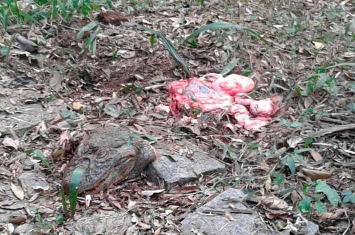 Jacaré é decapitado e corpo é roubado de zoológico emAlfenas