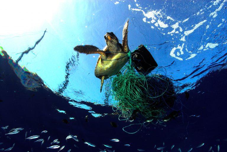 Descarte de lixo nos mares mata mais de mil tartarugas emSP