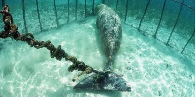 Animais marinhos são acorrentados em jaulas e explorados como atraçãoturística