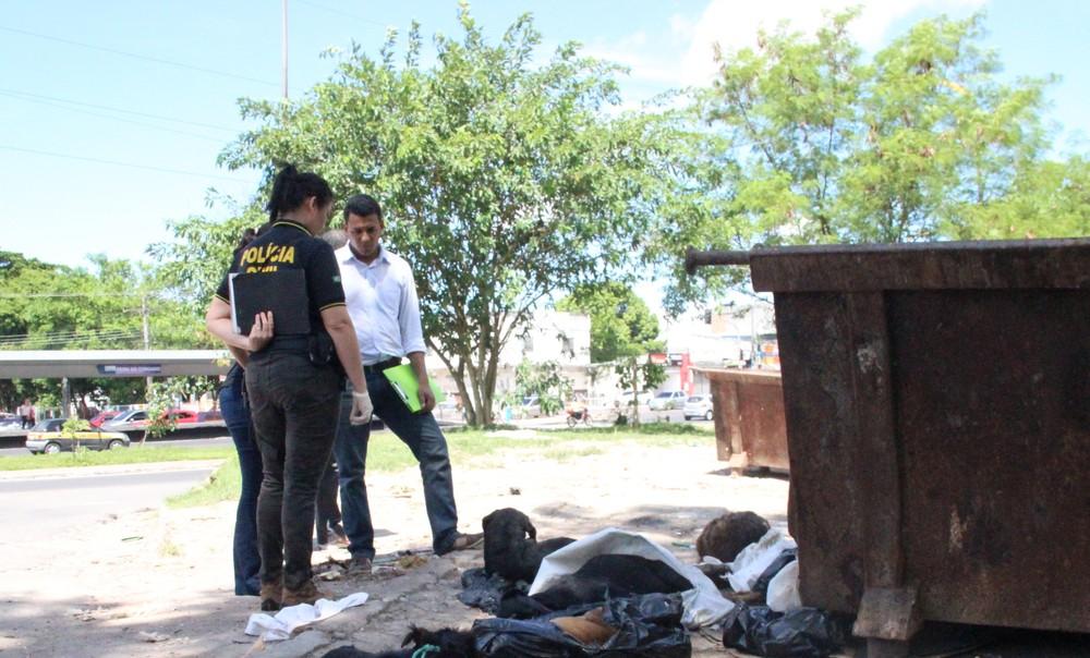 Em Manaus, 14 cães e gatos são achados mortos perto de lixeira emfeira