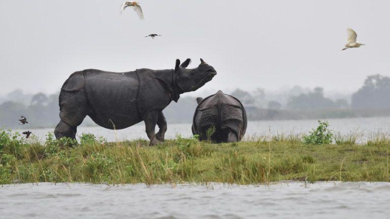 Extinção maciça de espécies é eminente, apontaestudo