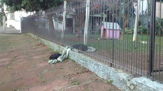 Cadela divide cobertor com cachorro de rua, e cena de solidariedade comoveweb…