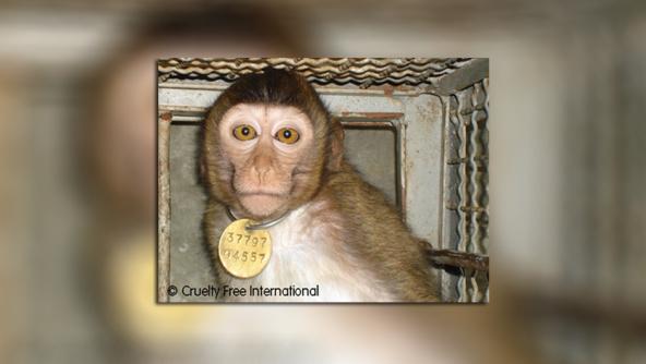 Air France transporta macacos paralaboratórios