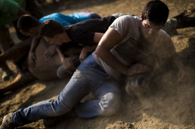 Dezenas de cavalos ficam traumatizados depois de serem agredidos emfestival