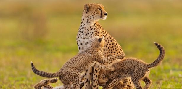 Mundo vive 6ª extinção em massa de animais – situação é pior do queparece