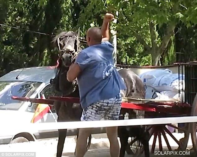 Cavalos sofrem extrema violência enquanto puxam carroças com mais de 500quilos