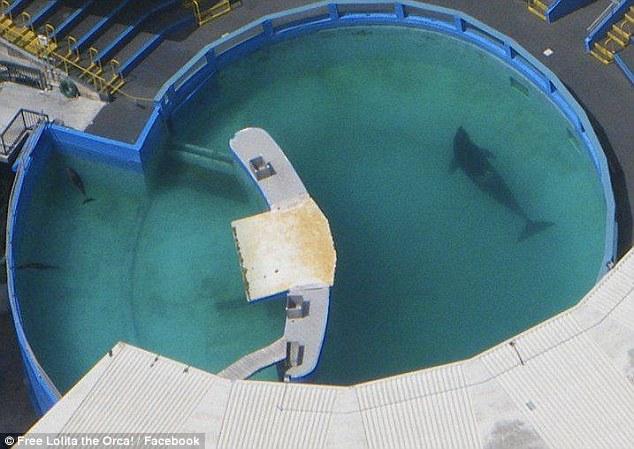 Furacão Irma: orca Lolita é abandonada noSeaquarium