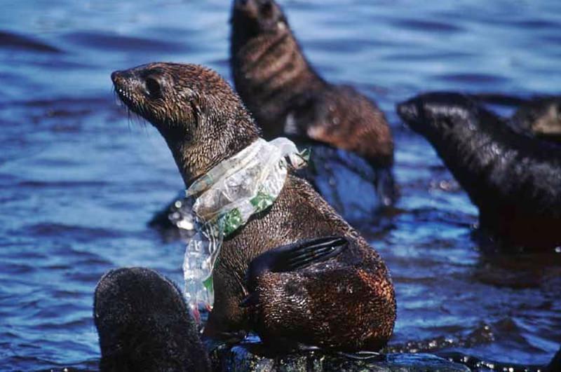 Já são mais de 1400 as espécies afetadas pelo lixo que despejamos nosoceanos