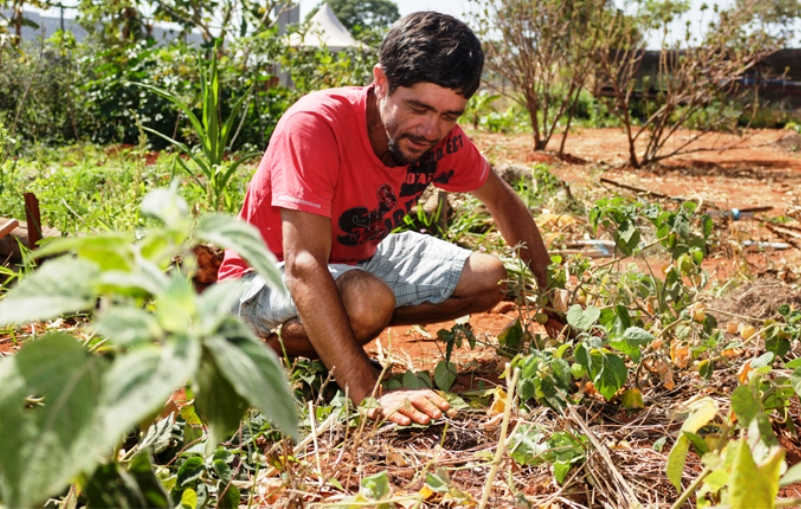 Brasília implementa horta pública para moradores de rua cultivarem alimentos e ervasmedicinais